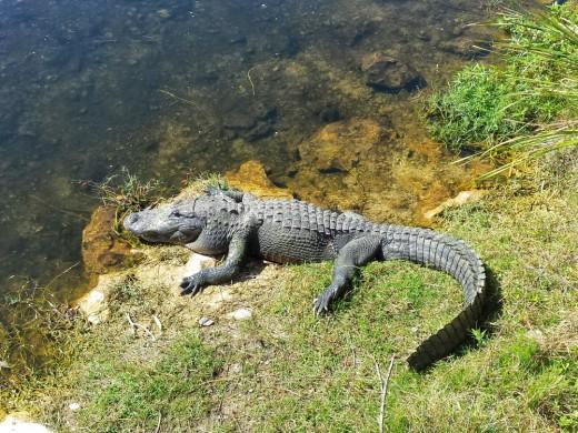 Florida 2015 (28)